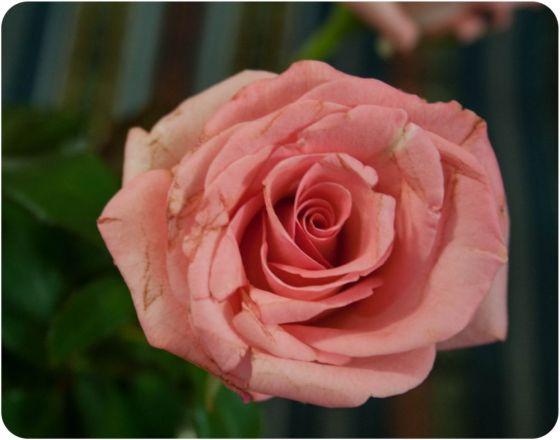 roseres