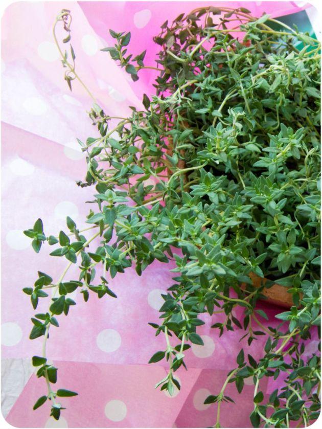 thymeflower]res