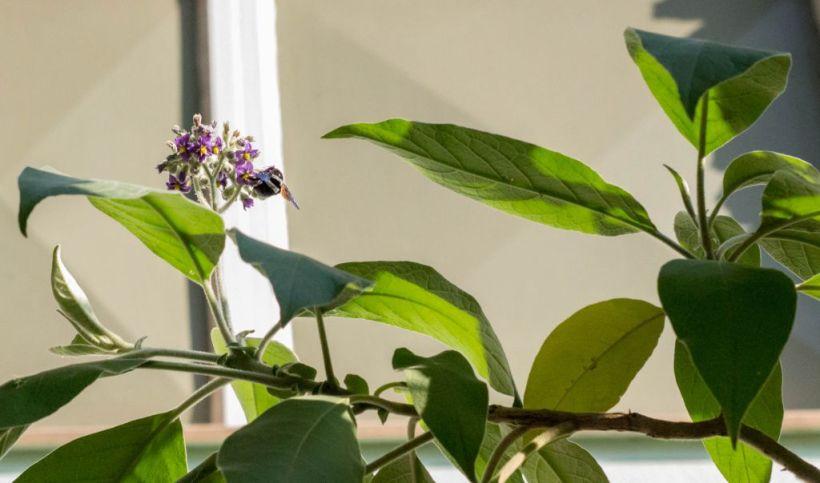 buzzyplant-1res