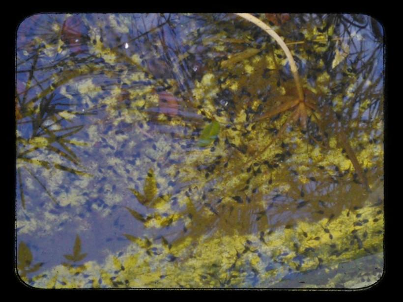 Lomogram_2014-10-22_04-17-56-PM