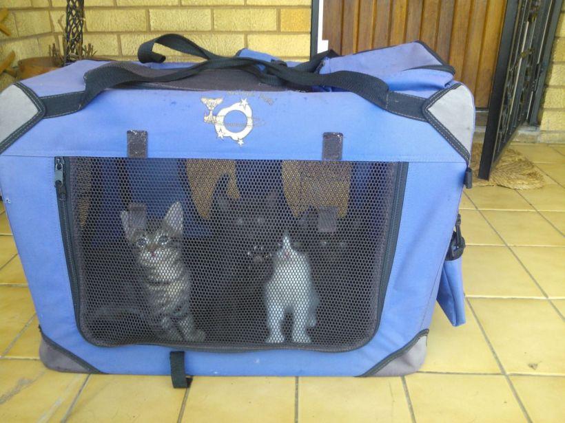 kittybasket