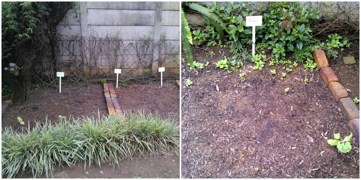 gardening2.jpg