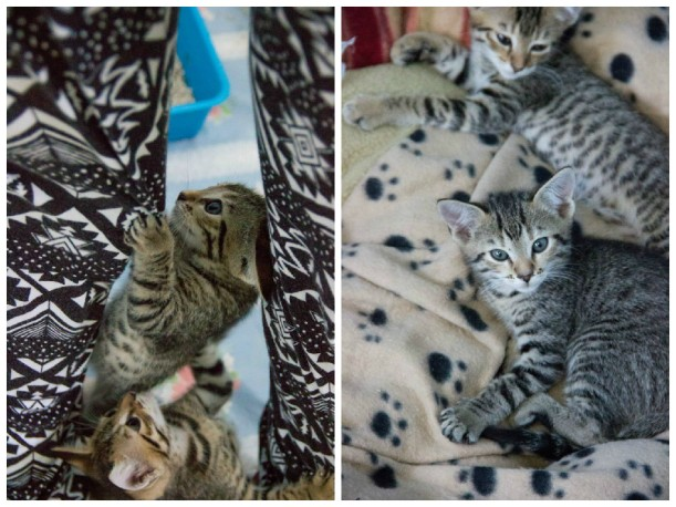 kittybabies