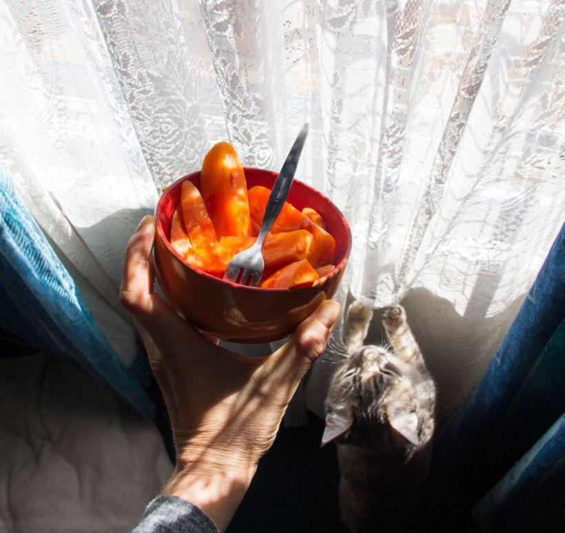 carrotfriesfreyja