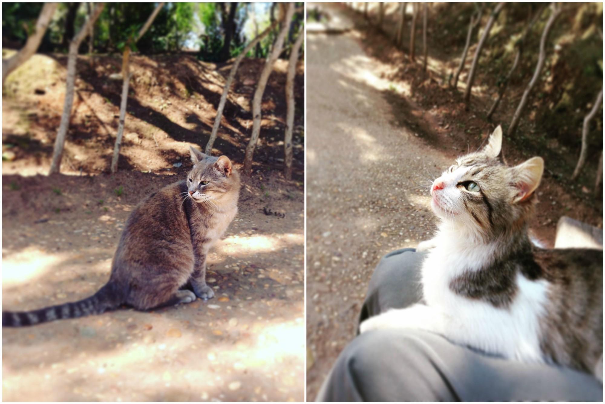 chellahcats