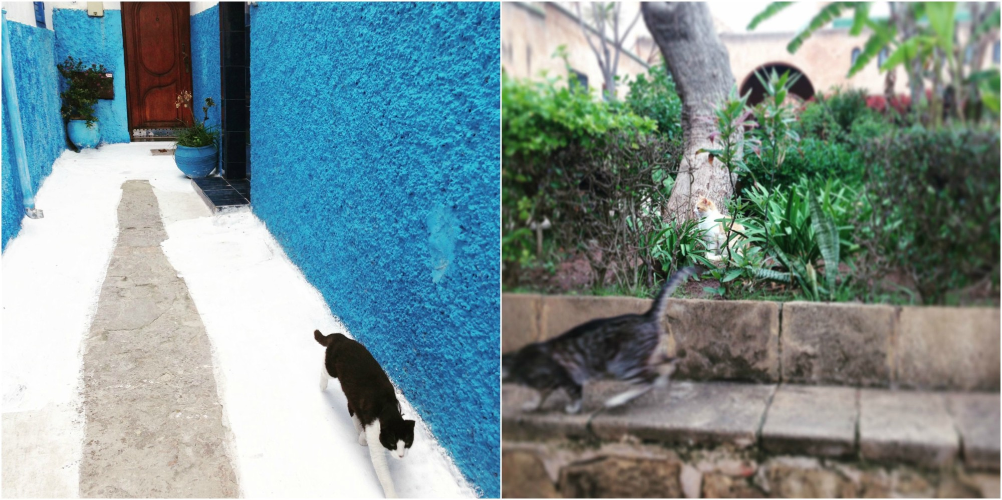 kasbahcats